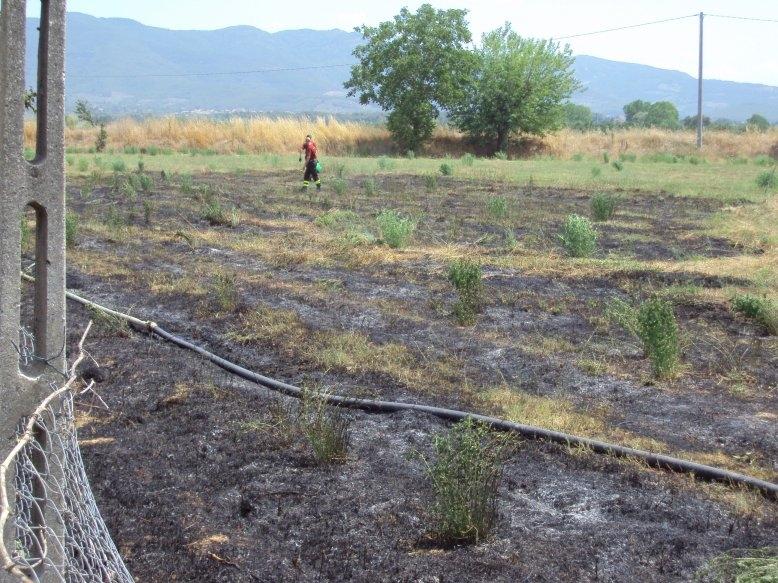 A fuoco campo ad Alberoro: anziana salvata da due agricoltori