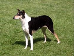 Foiano: IV Esposizione Nazionale Canina