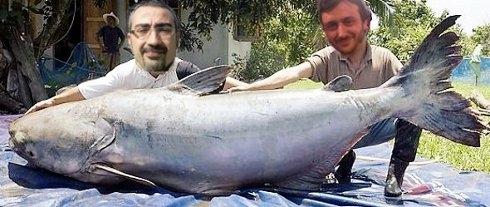 Il petrolio a Camucia era un Pesce d'Aprile (purtroppo!)
