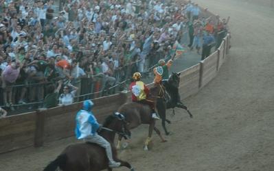 Castiglioni, Palio: visite veterinarie e test ematici per l'anti-doping