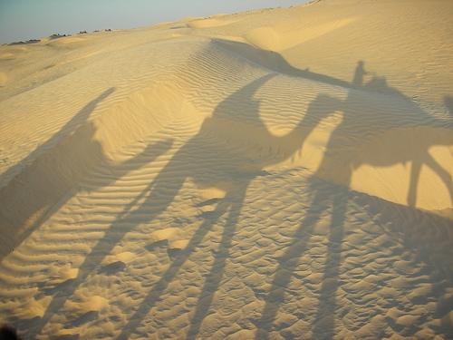 Il cammello di nuovo a zonzo per il bel paese