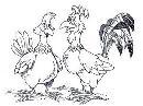 La gallina Piera e il gi-gallò