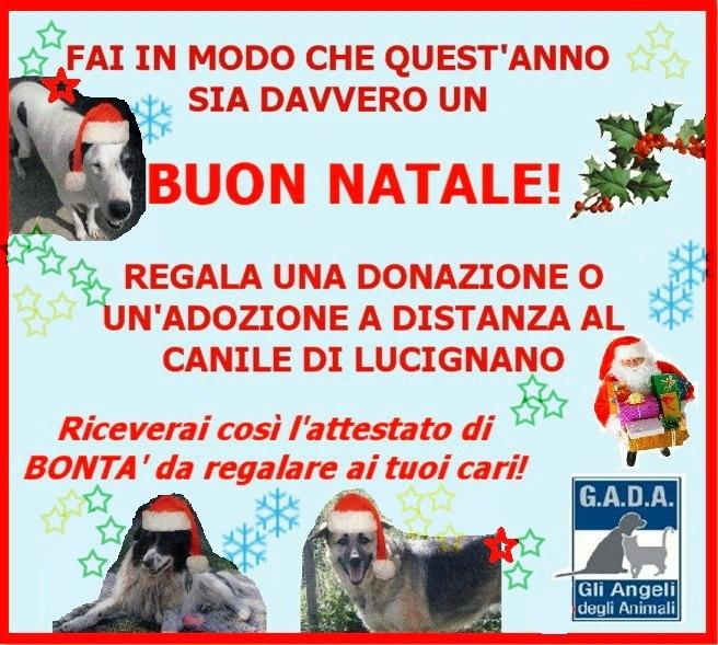 Per Natale regala un'adozione dal Canile di Lucignano