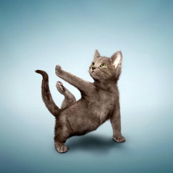 Mi hanno consigliato di fare Yoga