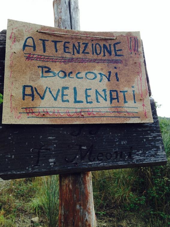 Bocconi avvelenati a Castiglion Fiorentino: l'ASL mette in guardia