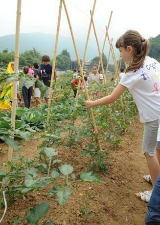Ritorna a Foiano il progetto 'Orti a scuola'