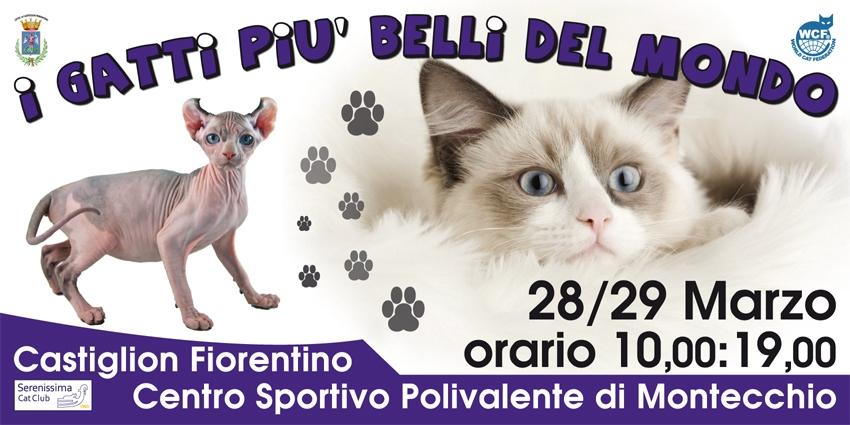 'I gatti più belli del mondo', due giorni di esposizione a Montecchio Vesponi
