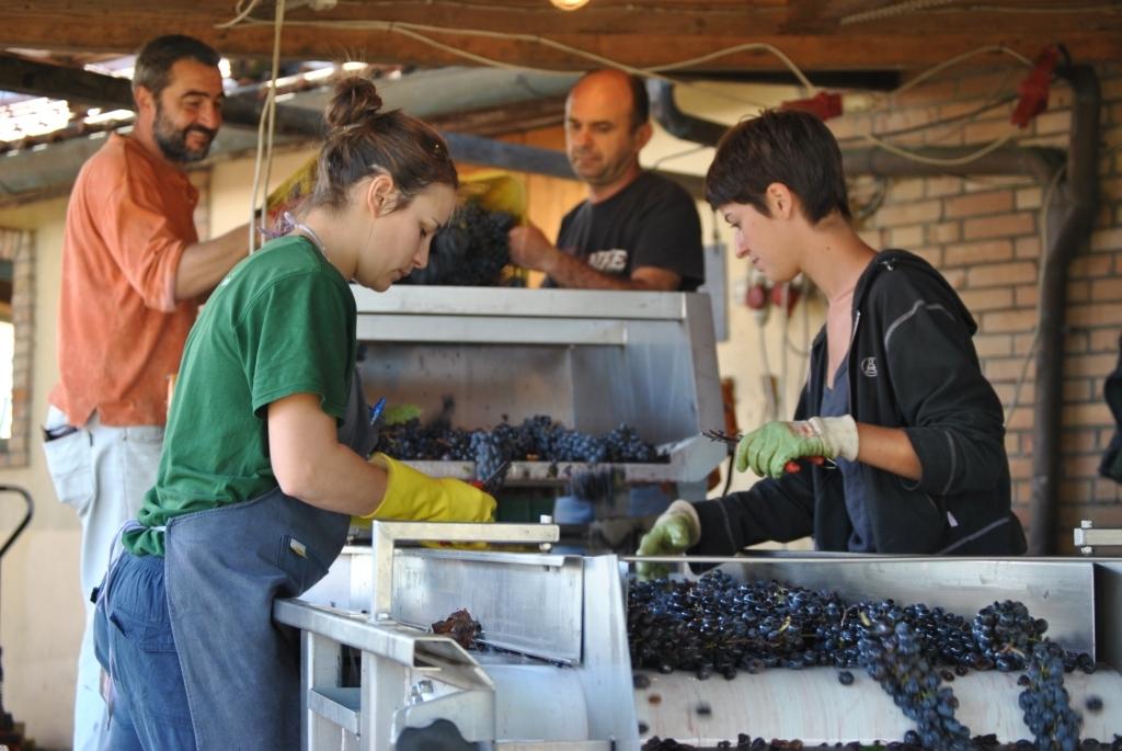 Tutti i numeri del Nobile di Montepulciano: il mercato, lavoro e impresa, le 'quote rosa' che crescono