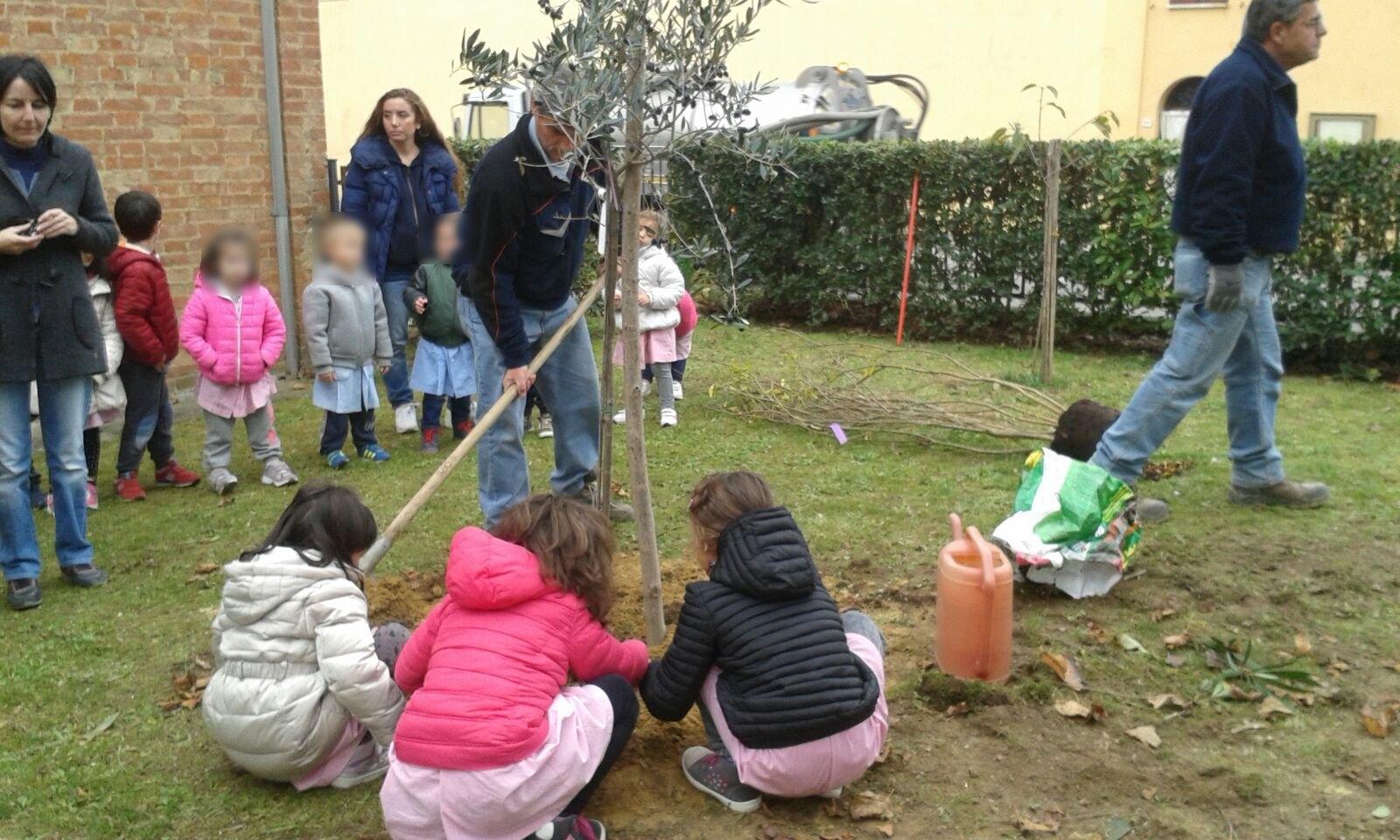 Montepulciano, dopo la Giornata Nazionale dell'Albero proseguono le attività
