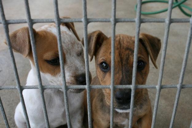 Cani abbandonati: quota record nel 2015 in Valdichiana. La Usl lancia l'allarme