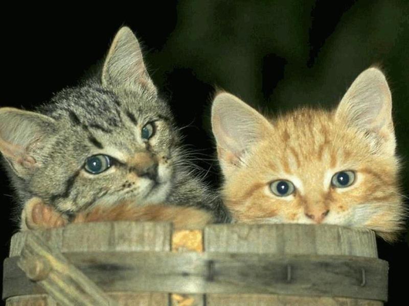 Castiglion Fiorentino, campagna di sterilizzazione dei gatti randagi