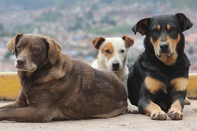 Cani: Combattere l'illegalità e gli abbandoni, incentivare le adozioni