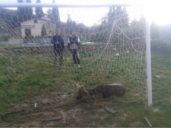 Daino imprigionato in una rete salvato a Castiglioni