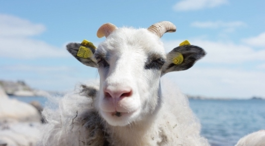 #SHEEPWITHAVIEW - LA NORVEGIA DA UN ALTRO PUNTO DI VISTA