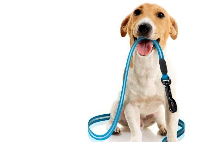 Deiezioni canine: le regole ci sono, ma se nessuno controlla...