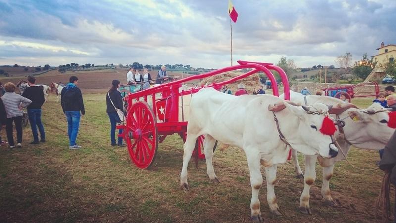 Mostra del Carro Agricolo, il bilancio dell'edizione 2016