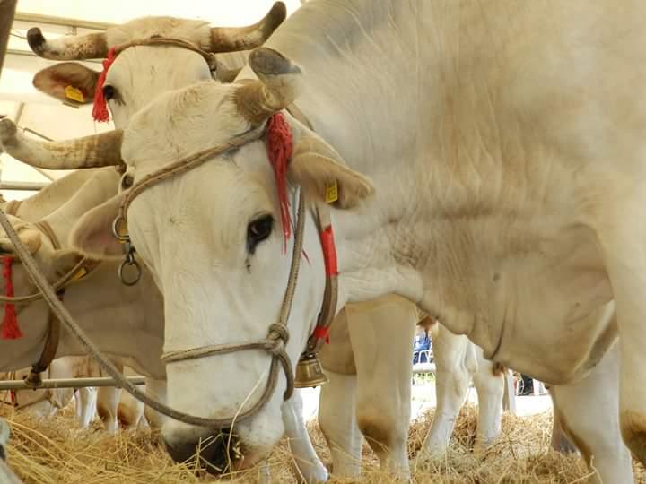 Fiera dell'Agricoltura alle Tre Berte di Montepulciano, il programma