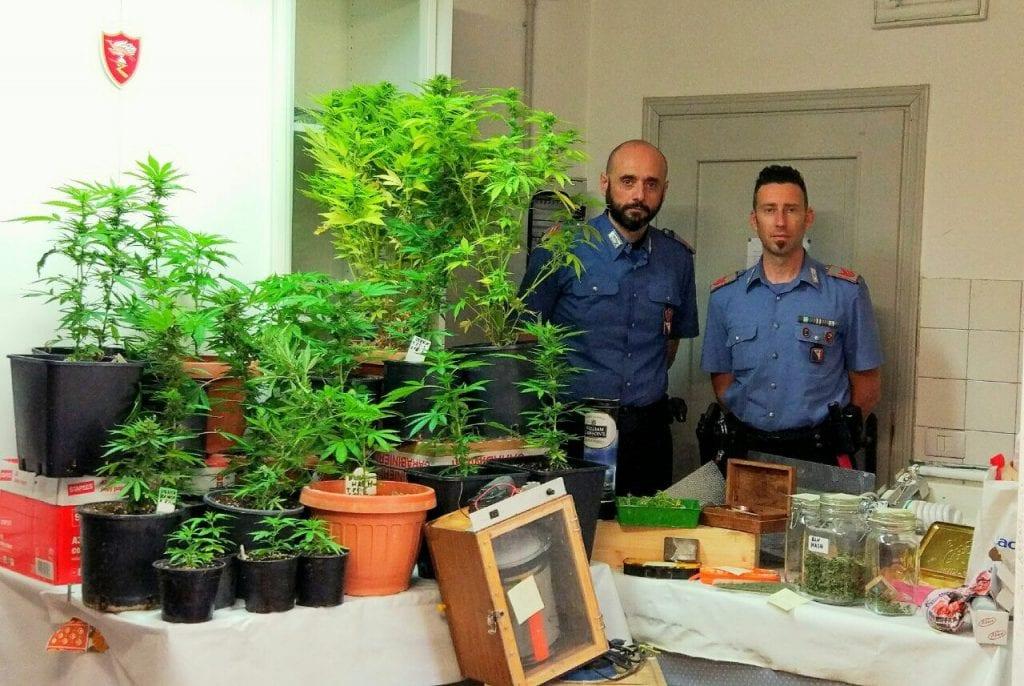 26 piante di marijuana scoperte dai Carabinieri nel giardino di due foianesi