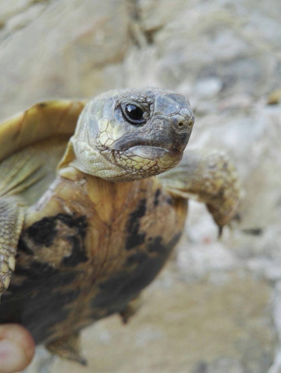 Lo strano caso della tartaruga cortonese... ordinaria follia o ordinaria amministrazione?