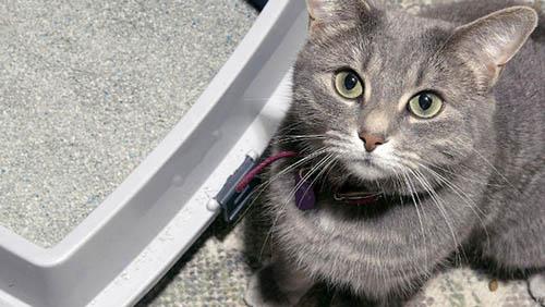 Il mio gatto e la raccolta Porta a Porta: dove metto la sua lettiera?