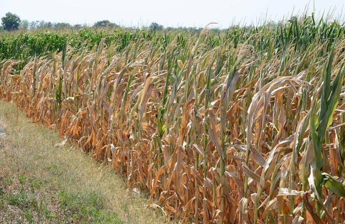 Emergenza siccità, Agnelli chiede l'intervento della Regione