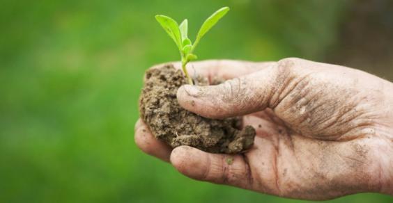 A Cortona la presentazione della nuova legge sull'agricoltura biologica