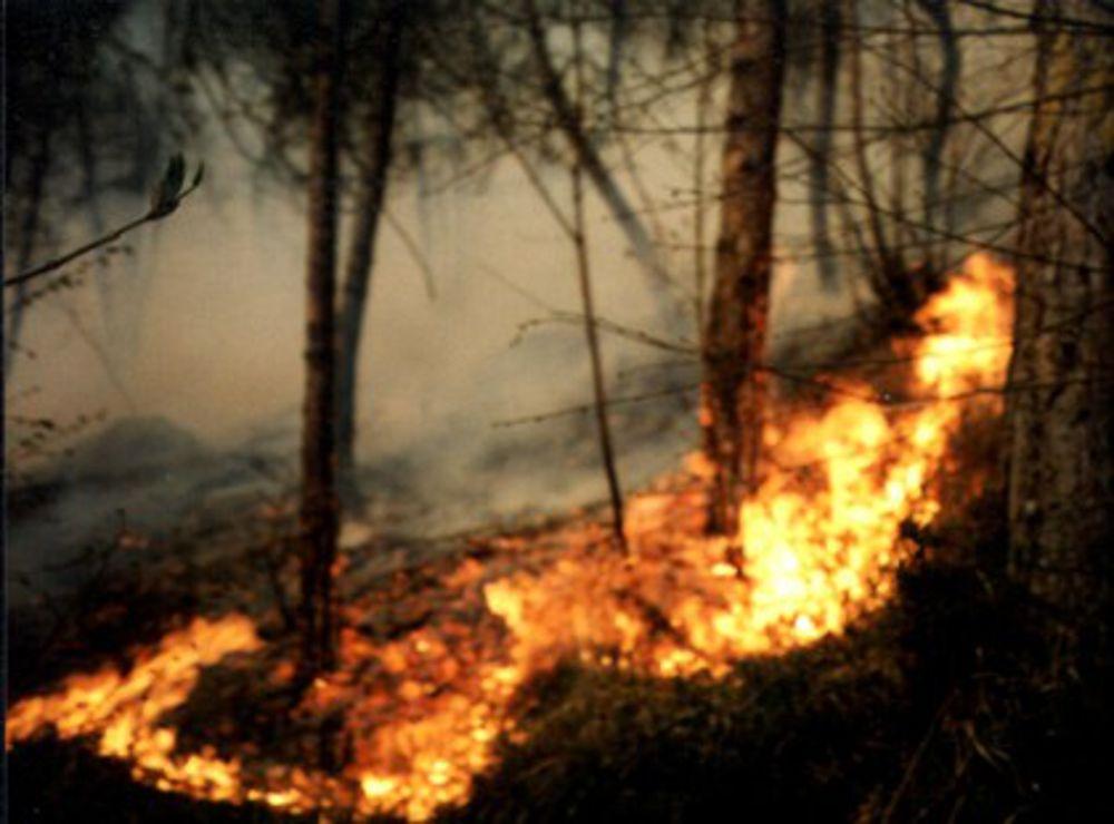Prorogato dalla Regione il periodo di rischio - incendi
