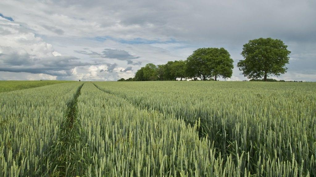 Visura catastale terreni: una breve guida alla lettura