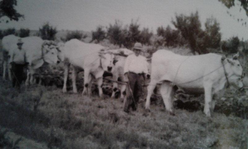 L'Agricoltura nell'aretino (1946 - 1990)