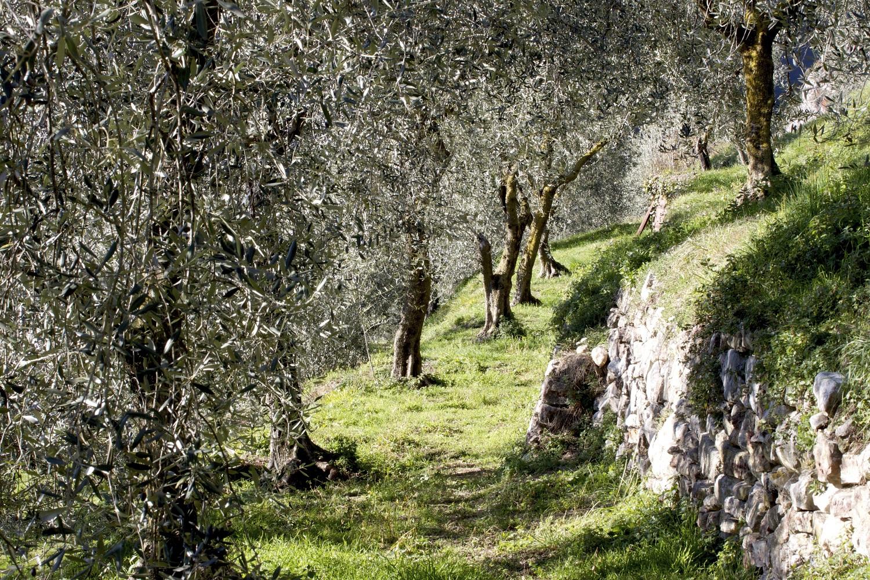 La cultura dell'Olio: incontro - conferenza a Cortona