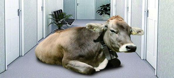 La Mucca nel corridoio