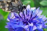 Gente di Cortona: la poetessa Nella Nardini Corazza