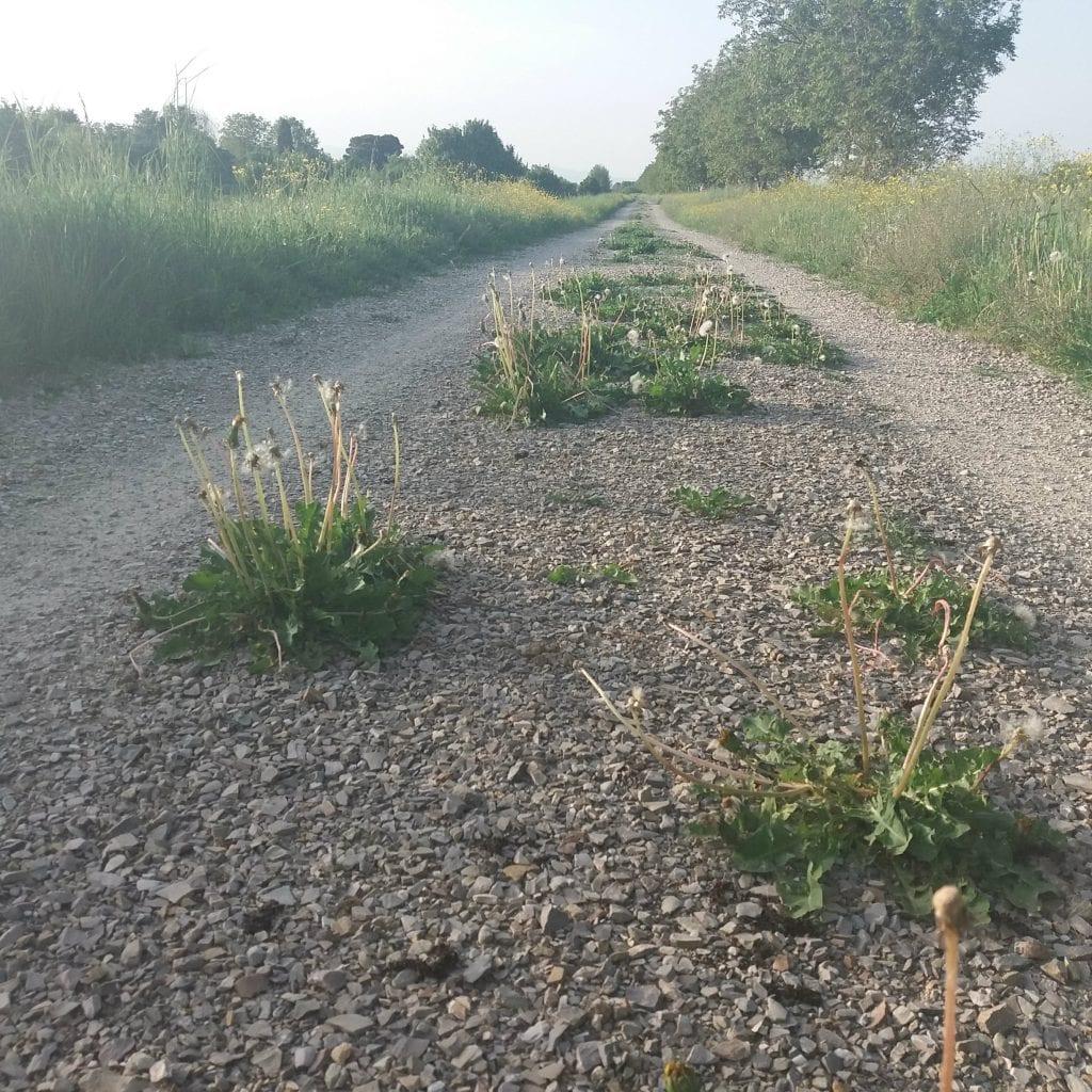 Sentiero della Bonifica, serve più manutenzione