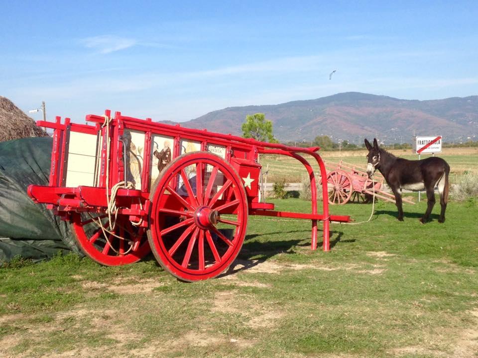 Entra nel vivo la 43a edizione della Mostra del Carro Agricolo di Fratticciola