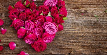 La rosa cremisi a lutto del compagno