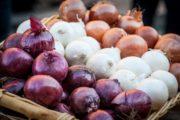 In Emilia Romagna per scalogno e cipolla