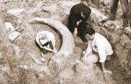 Scheletri di animali preistorici, sorprendente scoperta a Cortona