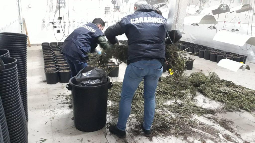 Foiano, i Carabinieri scoprono capannone in cui si coltivava Marijuana