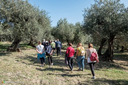 Camminata tra gli Olivi 84 Città dell'Olio insieme