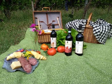 Primavera fra le vigne al Podere Casanova di Montepulciano