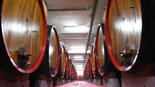 Visite in cantina della Strada del Vino Terre di Arezzo